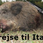 vildsvin jagt